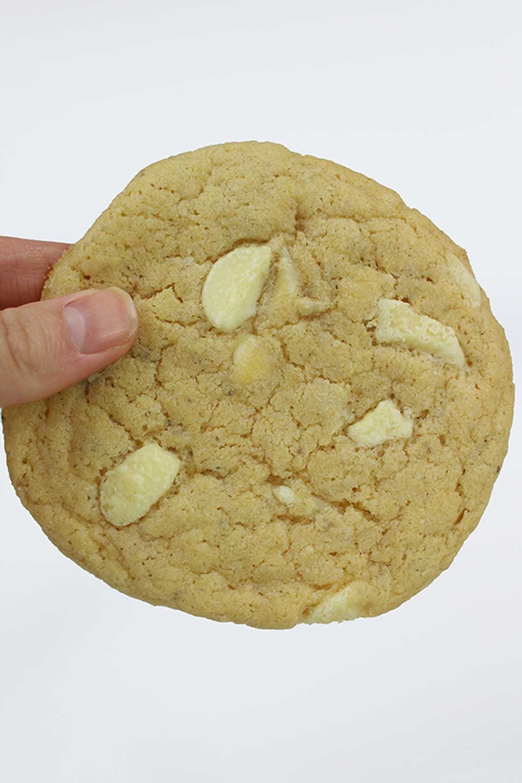 a hand holding up 1 large white chocolate chip cookie